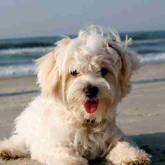 byron bay luxury accommodation Byron BeachHouse Pet Friendly