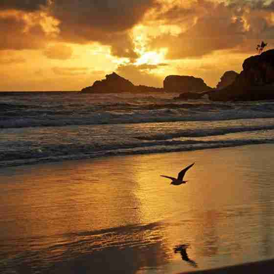 beachfront accommodation byron bay Broken Head Beach Sunrise