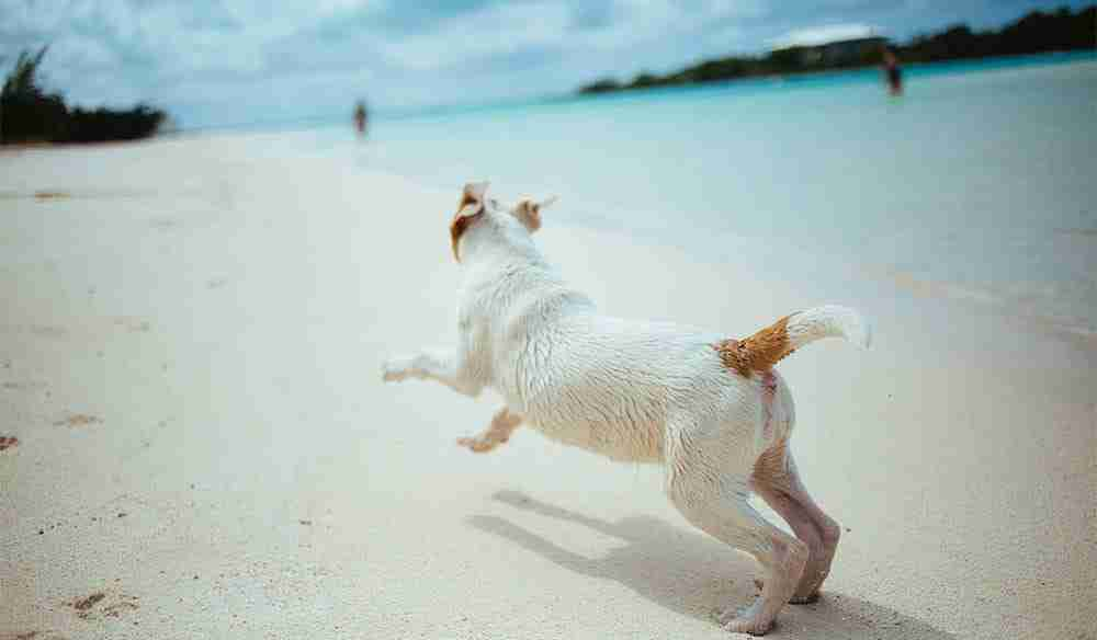 dog in the beach - Pet Friendly Byron Bay Accommodation & Surrounds blog