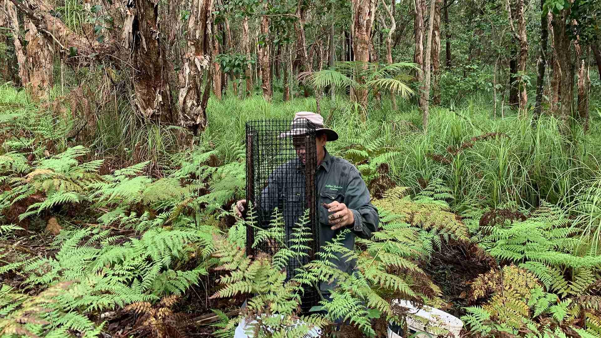 Man planting koala habitat trees in Broken Head Reserve